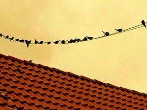 Vogelfrei Ein Erzählstück